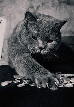 Chirld & Cat