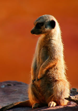 National Geographic Animal Album